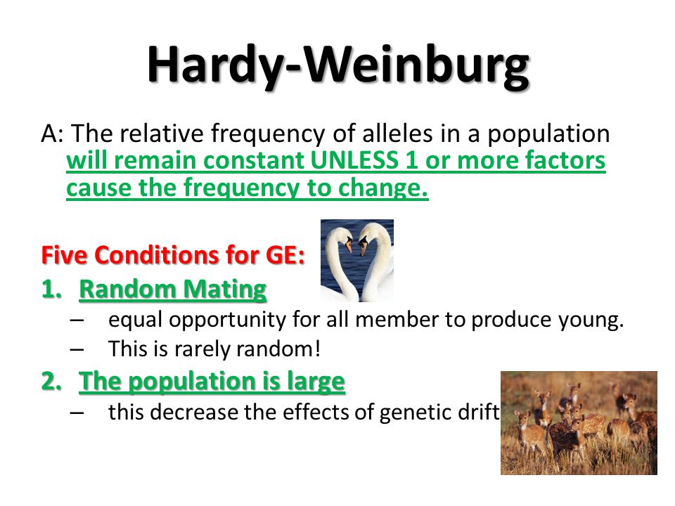 Hardy-Weinburg A: The relative frequency of alleles in a population will remain constant UNLESS 1 or more factors cause the frequency to change.
