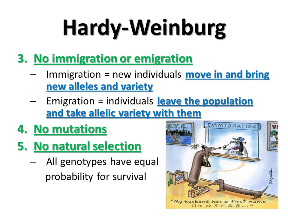 Hardy-Weinburg No immigration or emigration No mutations
