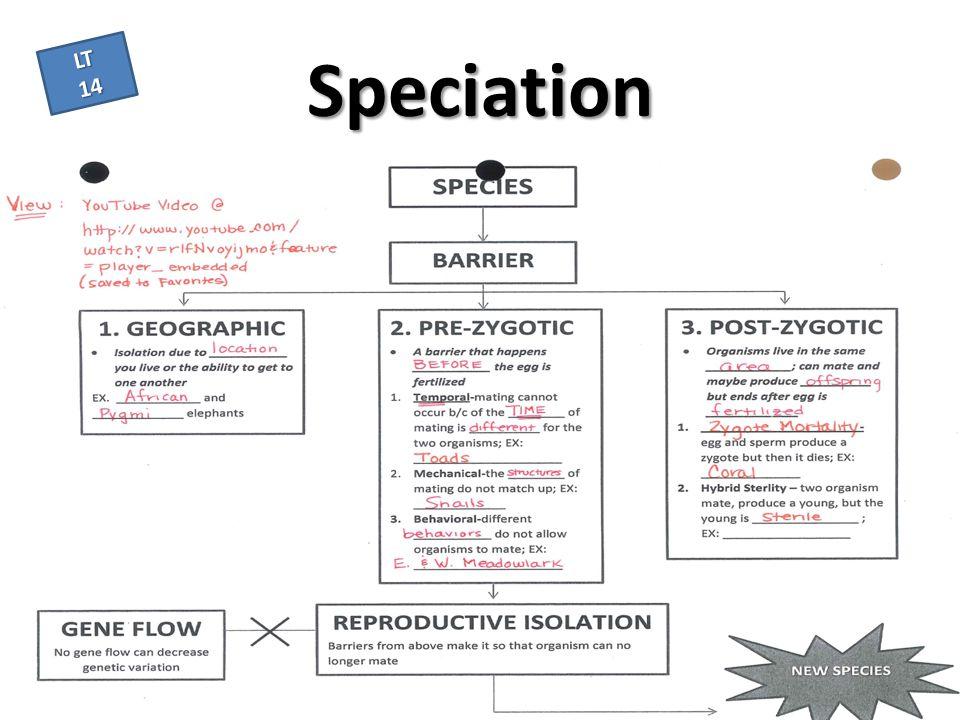 Speciation LT 14