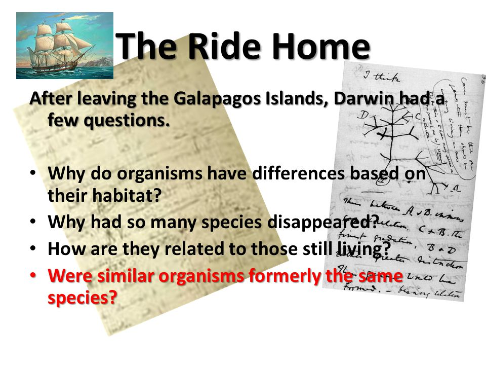 The Ride Home After leaving the Galapagos Islands, Darwin had a few questions. Why do organisms have differences based on their habitat