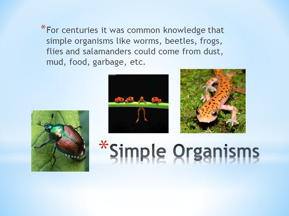 For centuries it was common knowledge that simple organisms like worms, beetles, frogs, flies and salamanders could come from dust, mud, food, garbage, etc.