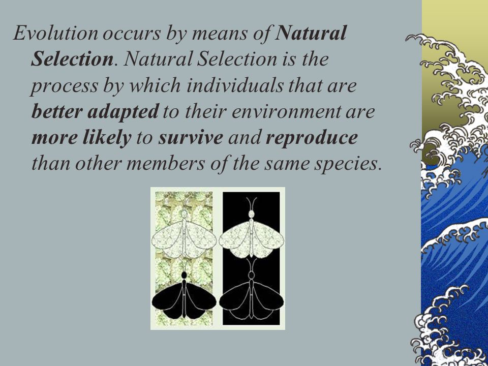 Evolution occurs by means of Natural Selection
