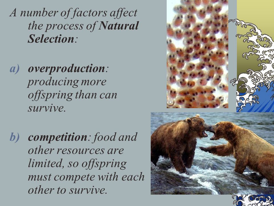 A number of factors affect the process of Natural Selection: