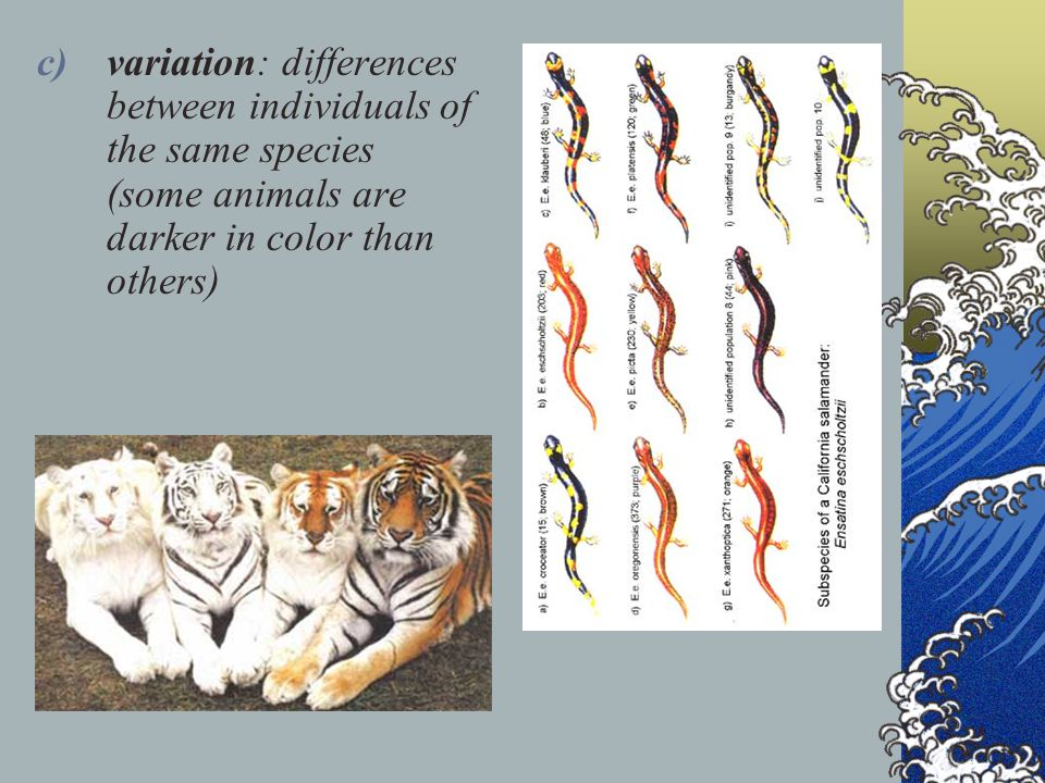 variation: differences between individuals of the same species (some animals are darker in color than others)