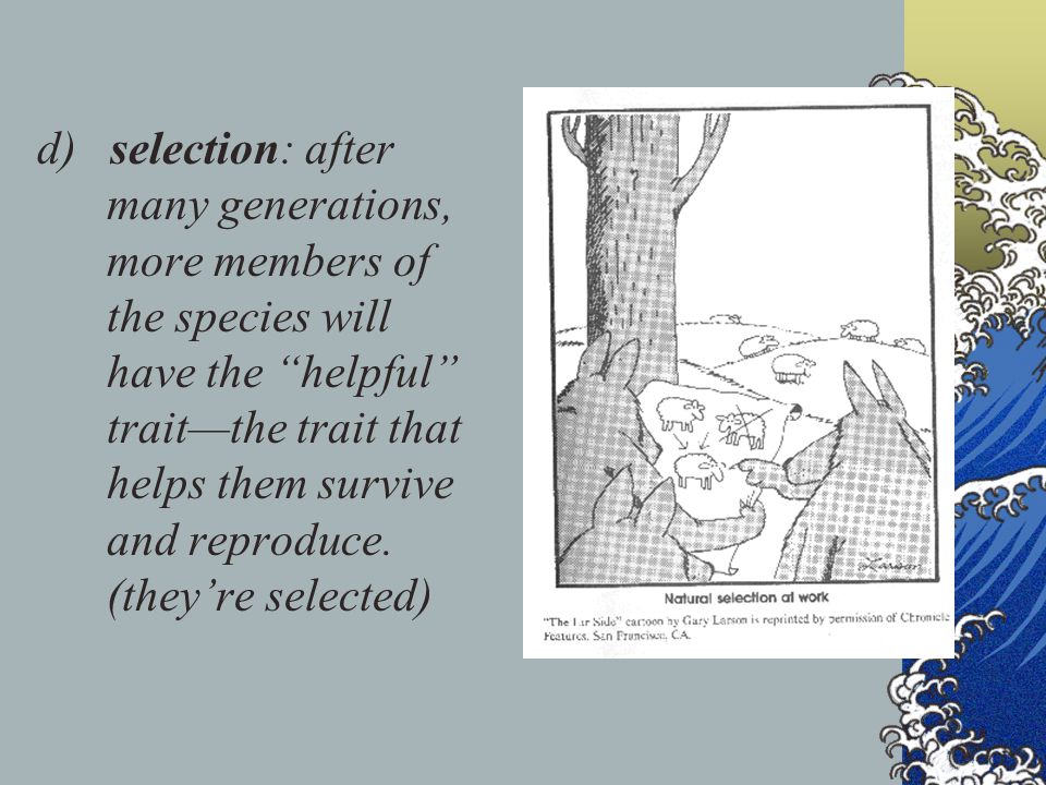 d) selection: after many generations, more members of the species will have the helpful trait—the trait that helps them survive and reproduce.