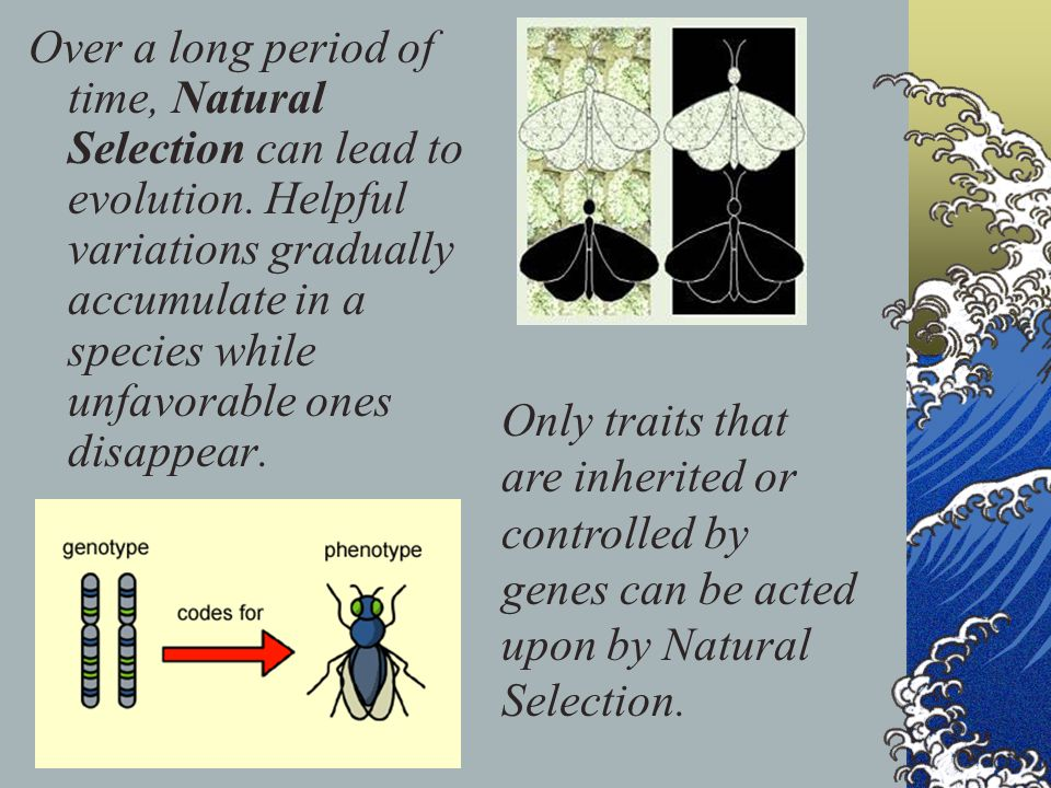 Over a long period of time, Natural Selection can lead to evolution