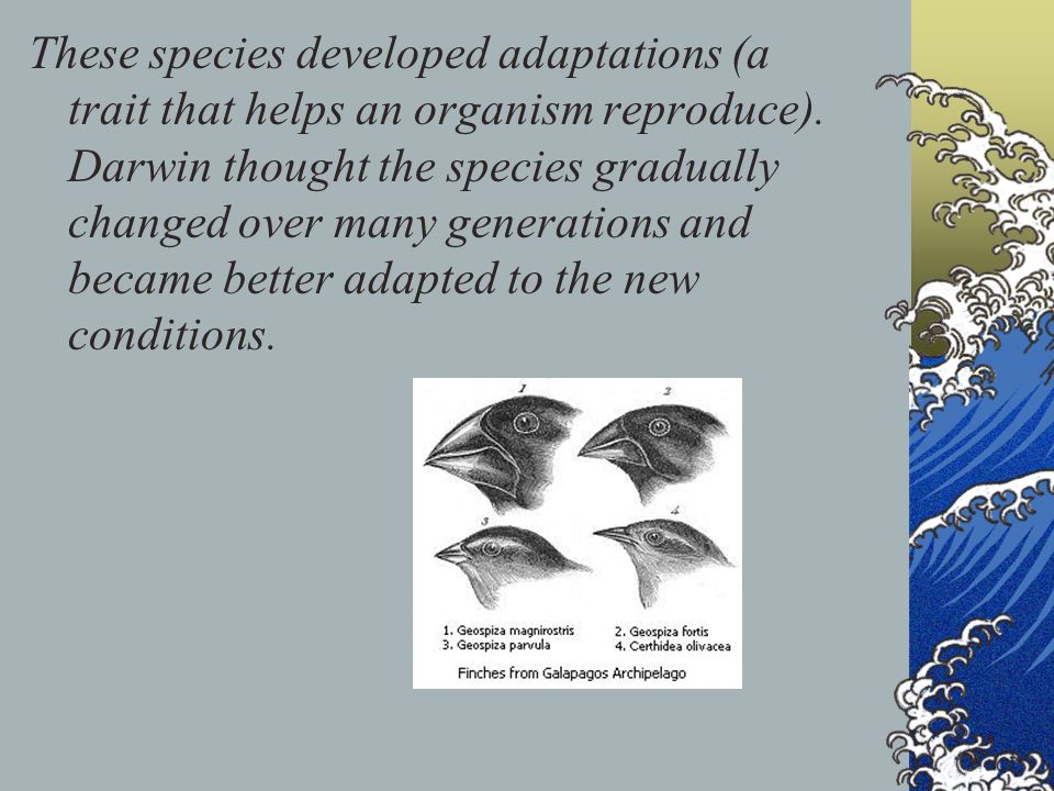 These species developed adaptations (a trait that helps an organism reproduce).
