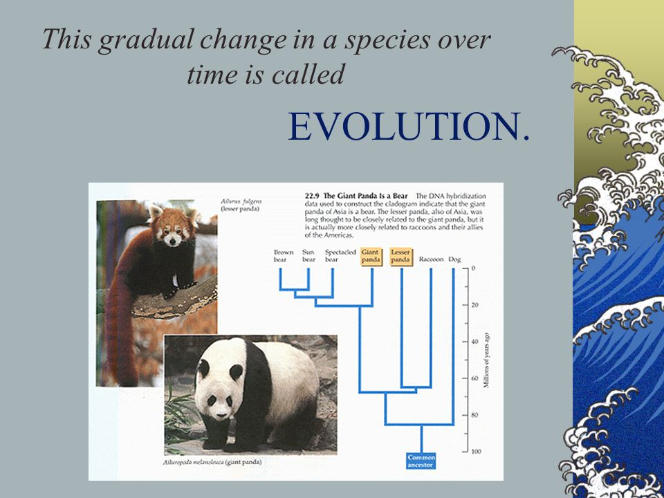 This gradual change in a species over time is called