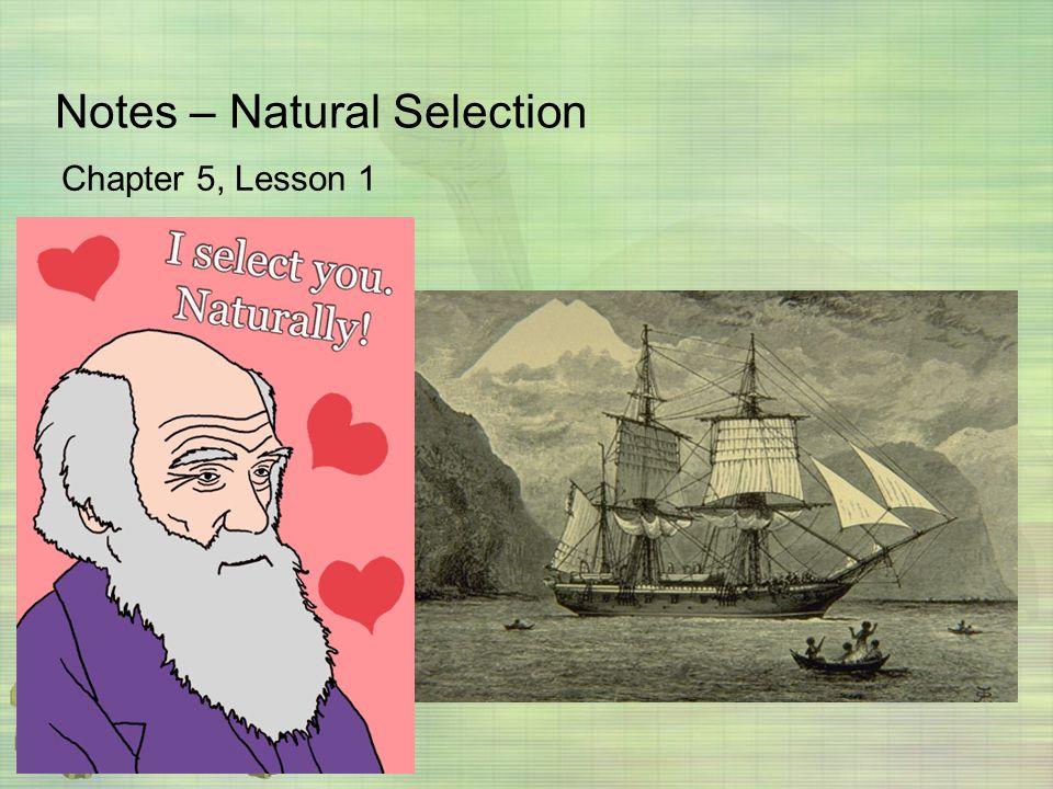 Notes – Natural Selection