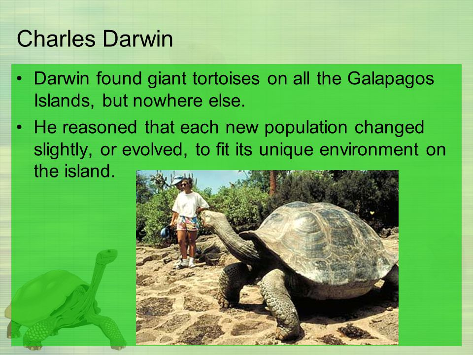 Charles Darwin Darwin found giant tortoises on all the Galapagos Islands, but nowhere else.