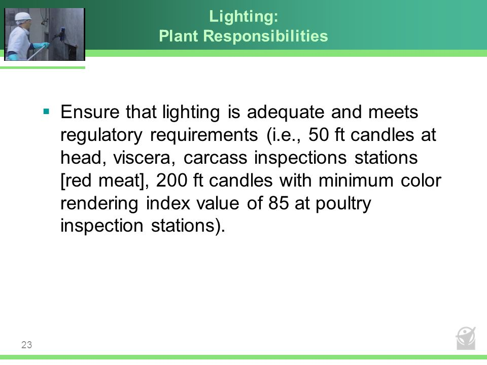 Lighting: Plant Responsibilities