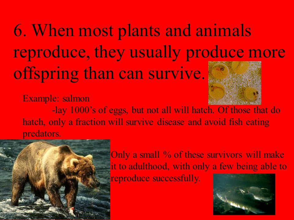 6. When most plants and animals reproduce, they usually produce more