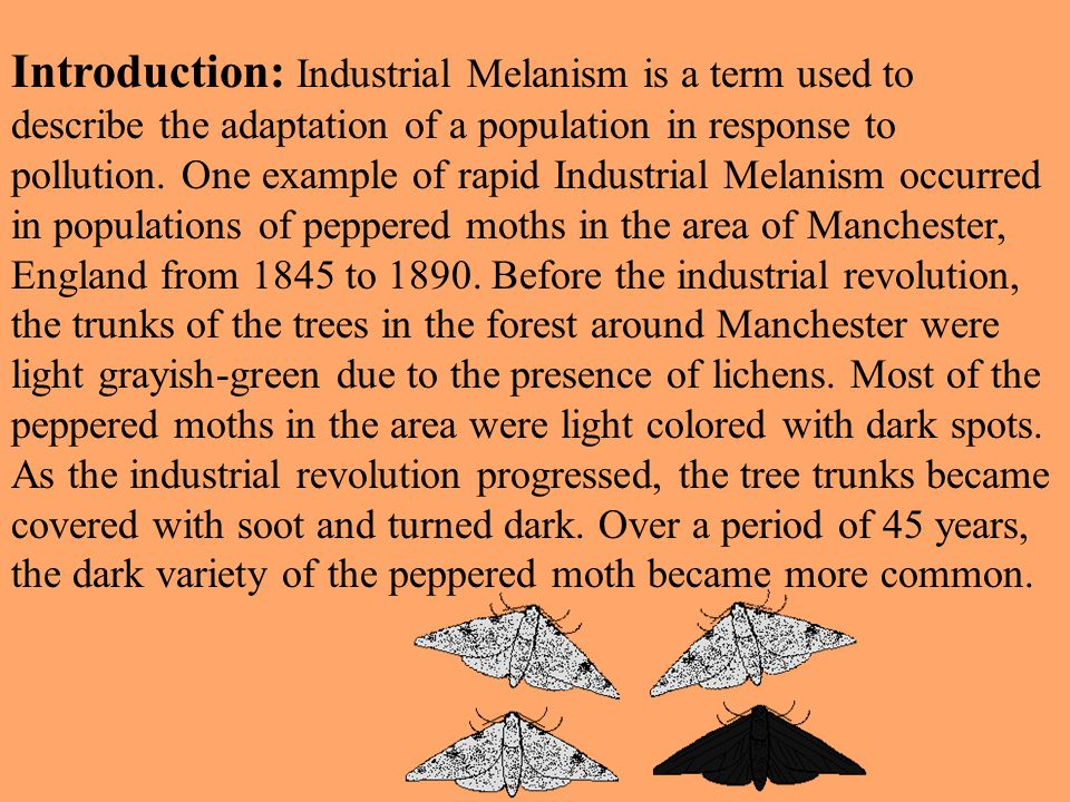 Introduction: Industrial Melanism is a term used to describe the adaptation of a population in response to pollution.