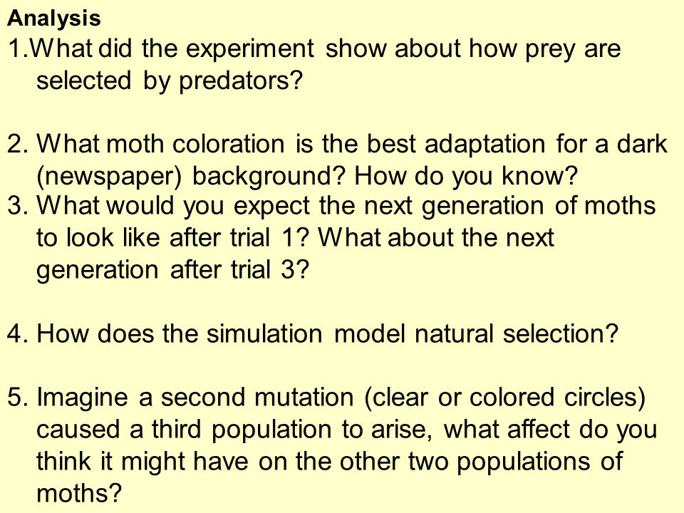 What did the experiment show about how prey are selected by predators