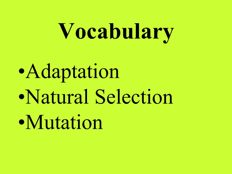 Vocabulary Adaptation Natural Selection Mutation