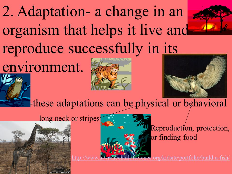 2. Adaptation- a change in an organism that helps it live and
