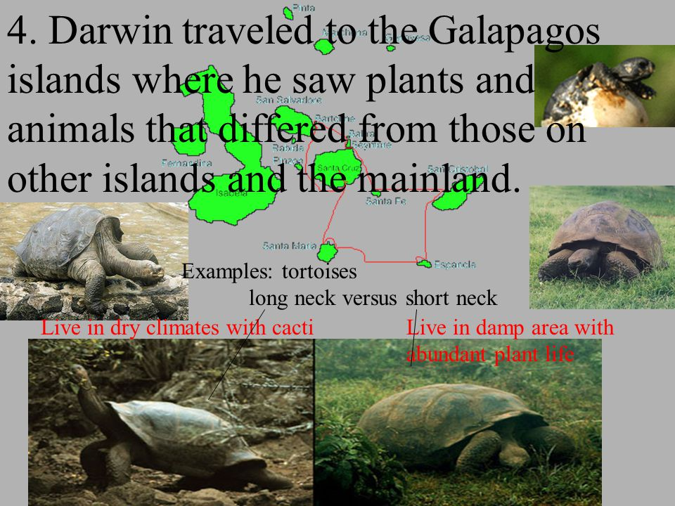 4. Darwin traveled to the Galapagos islands where he saw plants and