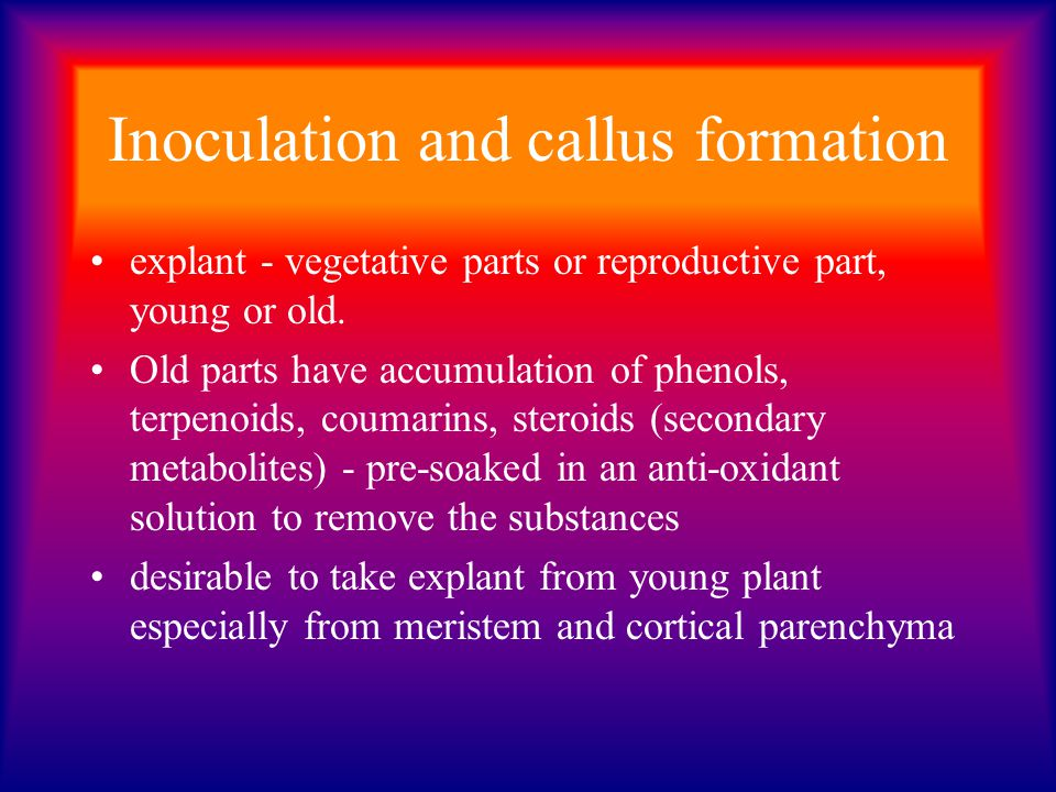 Inoculation and callus formation