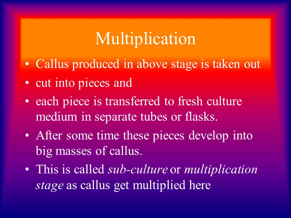 Multiplication Callus produced in above stage is taken out