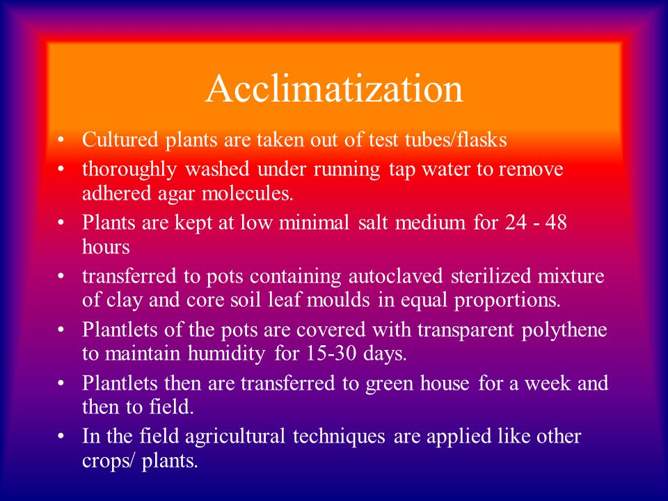 Acclimatization Cultured plants are taken out of test tubes/flasks