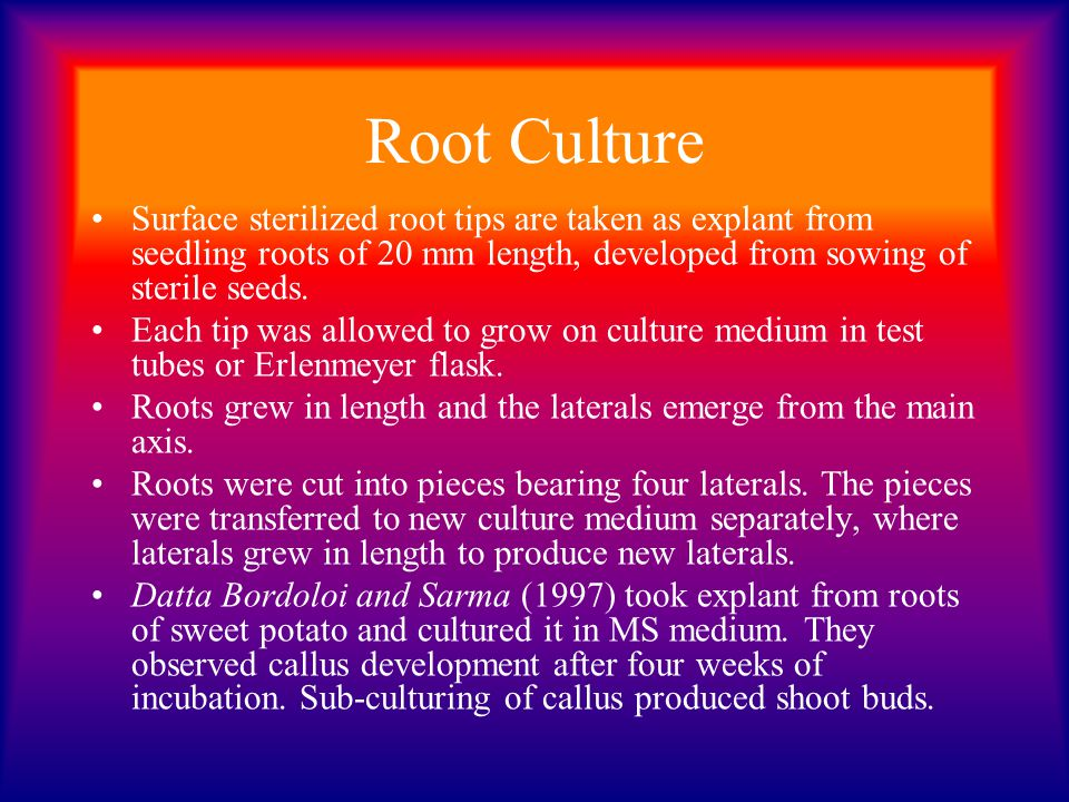 Root Culture Surface sterilized root tips are taken as explant from seedling roots of 20 mm length, developed from sowing of sterile seeds.
