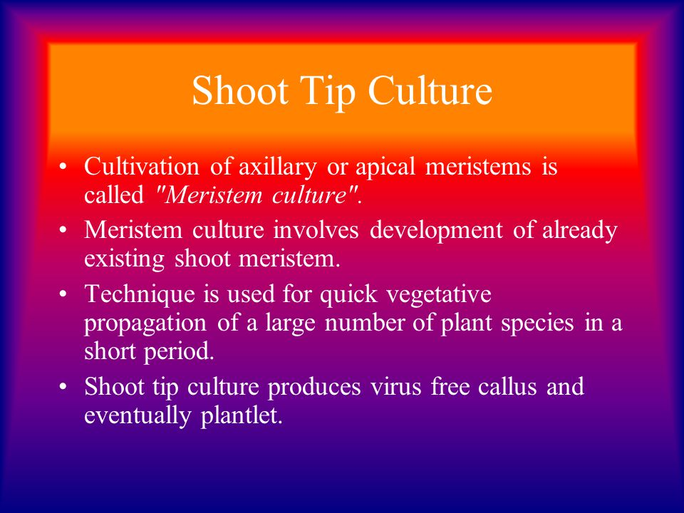 Shoot Tip Culture Cultivation of axillary or apical meristems is called Meristem culture .