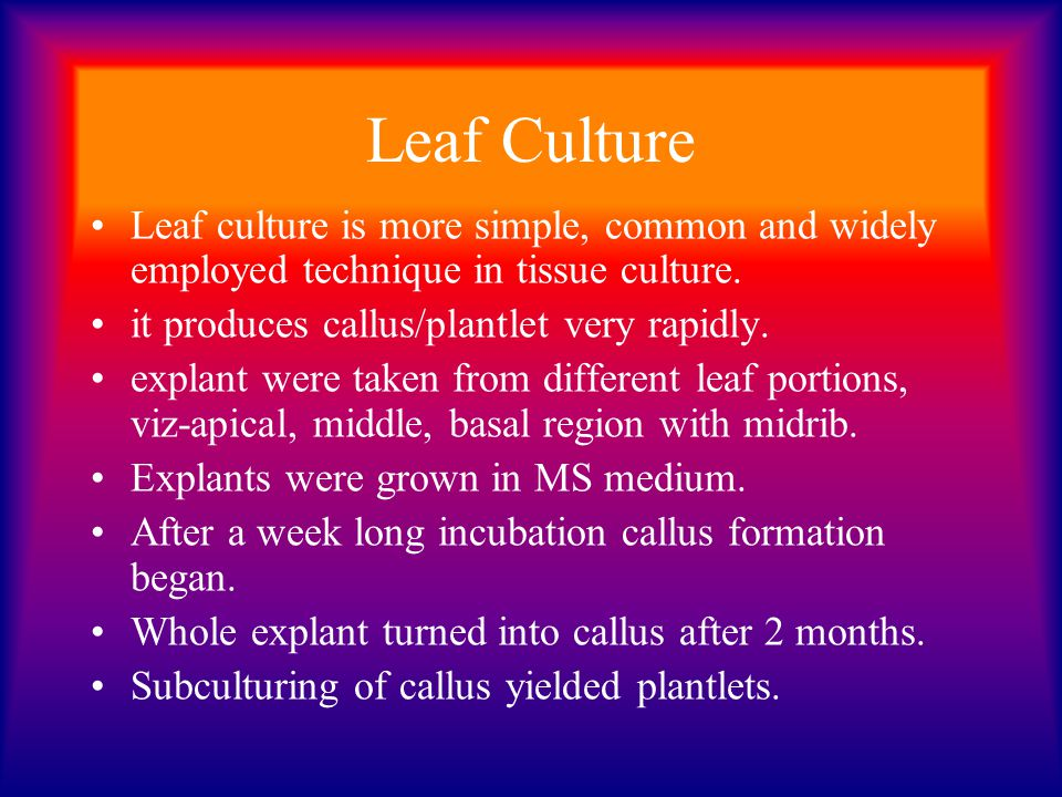 Leaf Culture Leaf culture is more simple, common and widely employed technique in tissue culture. it produces callus/plantlet very rapidly.