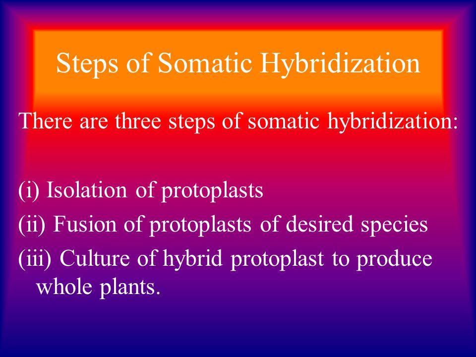 Steps of Somatic Hybridization