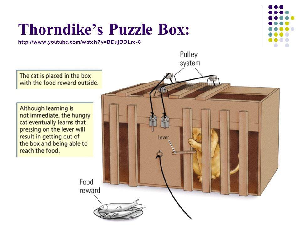 Thorndike's Puzzle Box: http://www.youtube.com/watch v=BDujDOLre-8