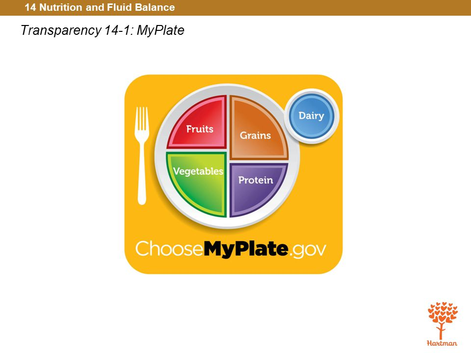 Transparency 14-1: MyPlate