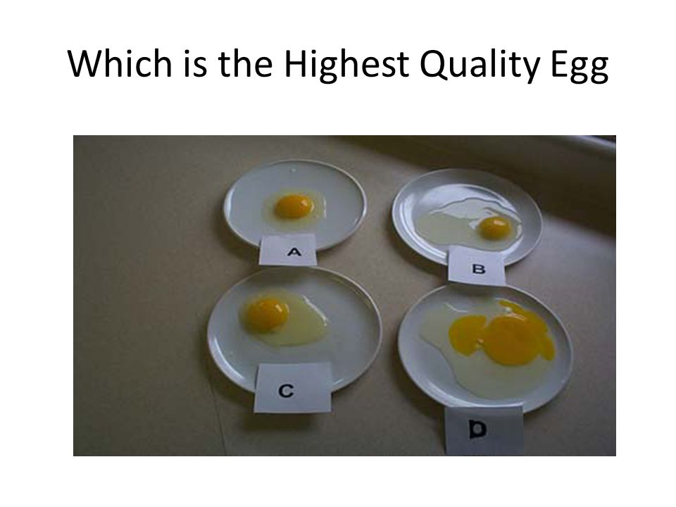 Which is the Highest Quality Egg