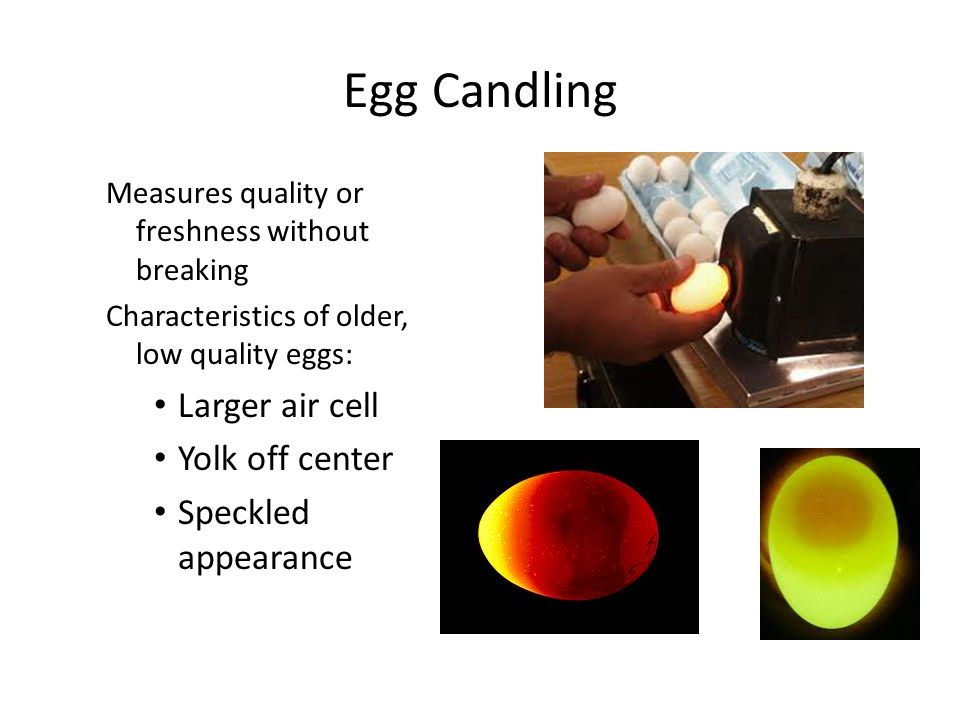Egg Candling Larger air cell Yolk off center Speckled appearance
