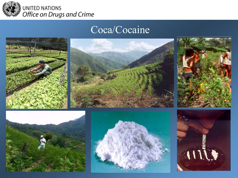Coca/Cocaine