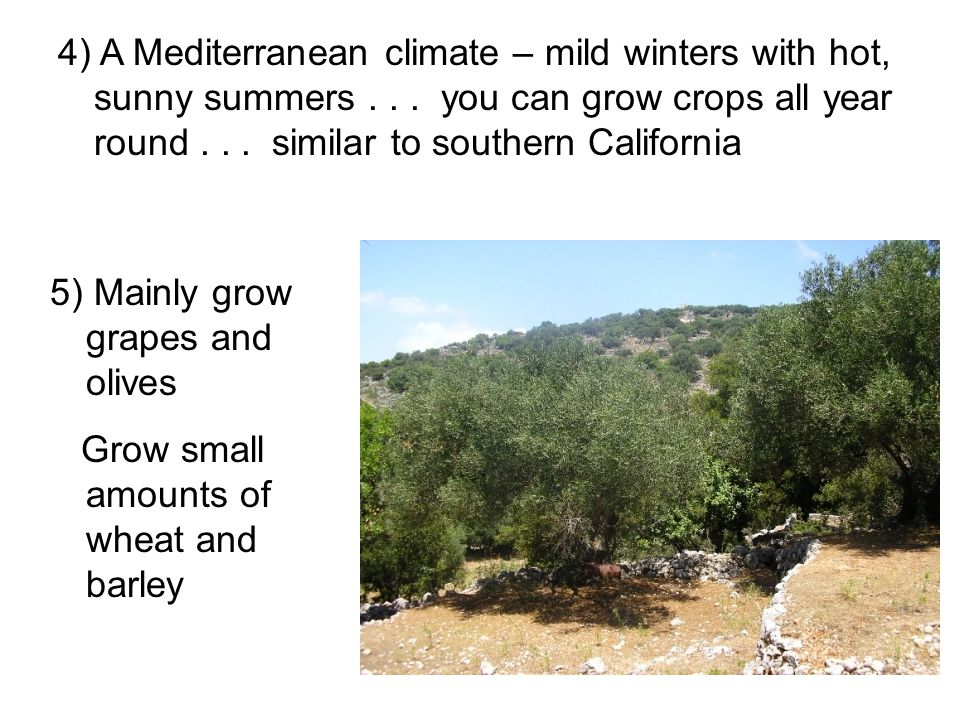 4) A Mediterranean climate – mild winters with hot, sunny summers