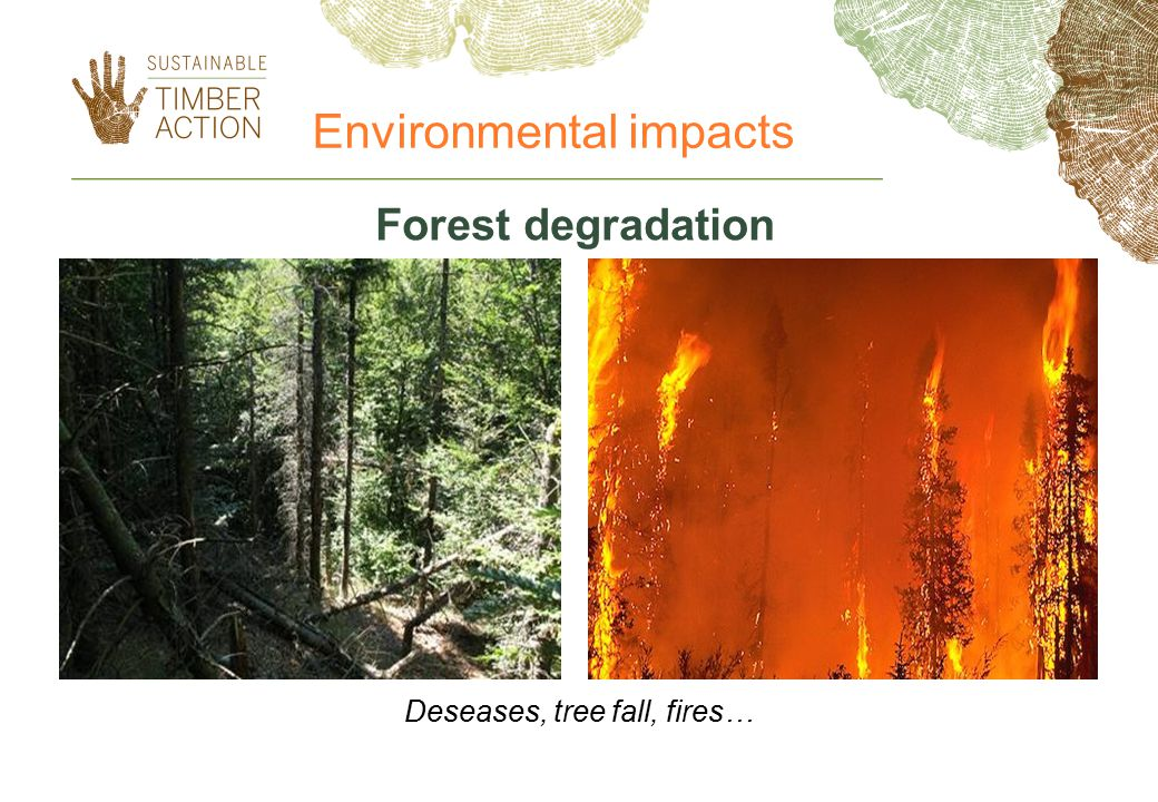 Deseases, tree fall, fires…