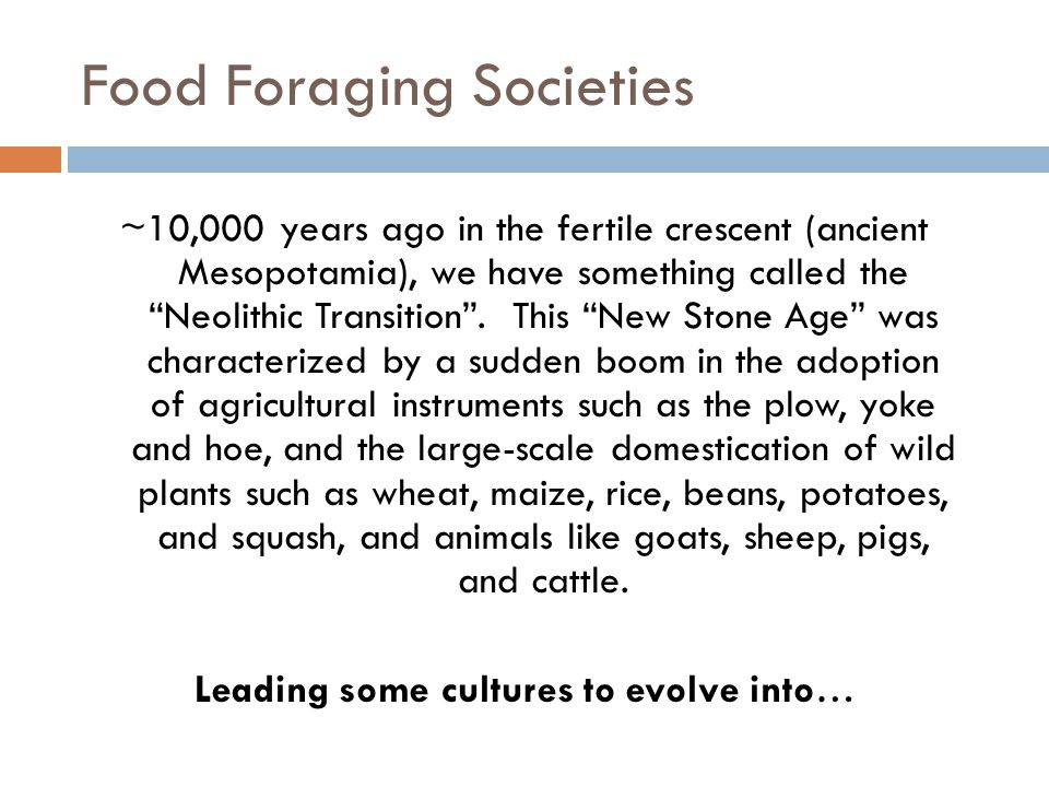 Food Foraging Societies