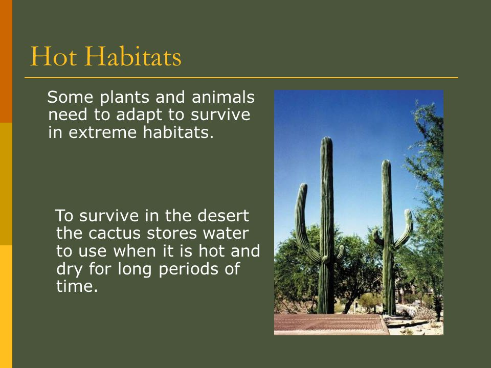 Hot Habitats Some plants and animals need to adapt to survive in extreme habitats.