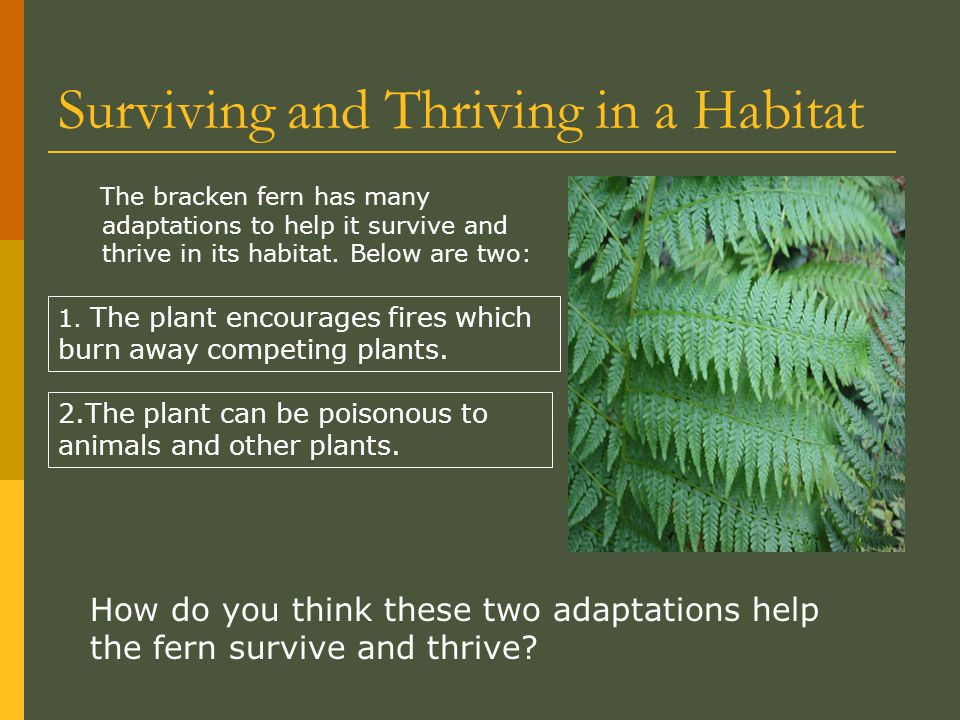 Surviving and Thriving in a Habitat