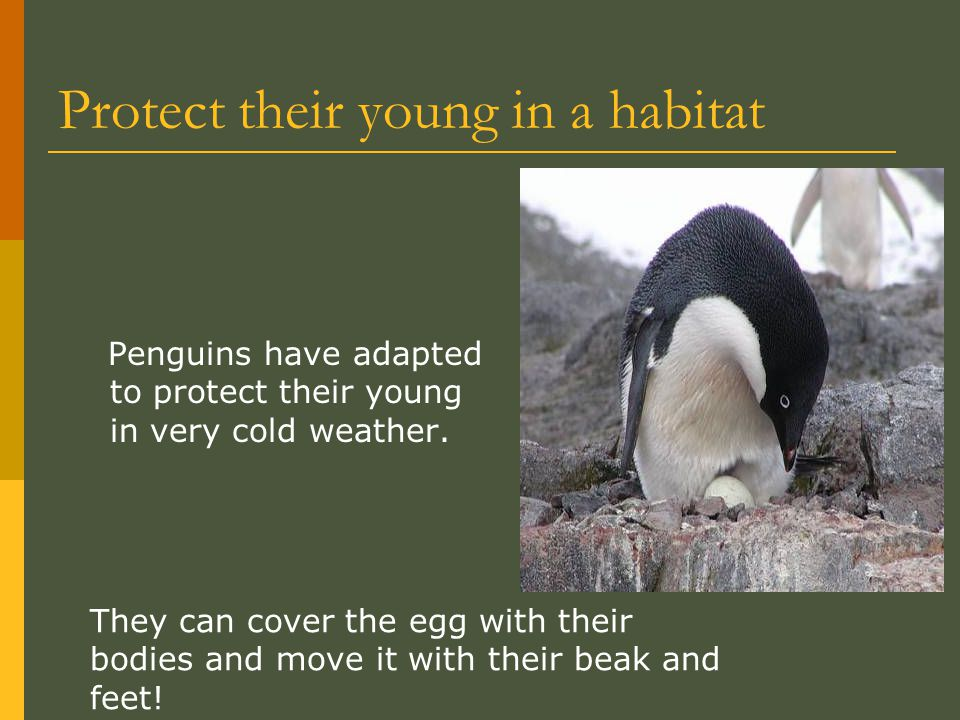 Protect their young in a habitat