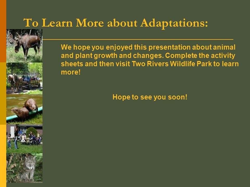 To Learn More about Adaptations: