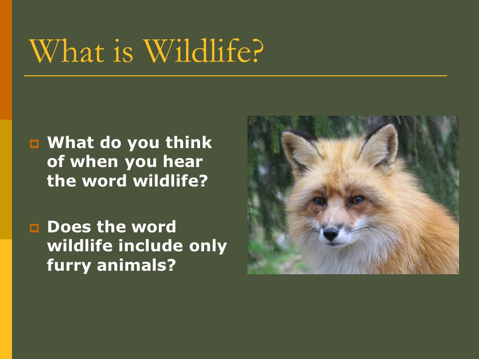 What is Wildlife. What do you think of when you hear the word wildlife.