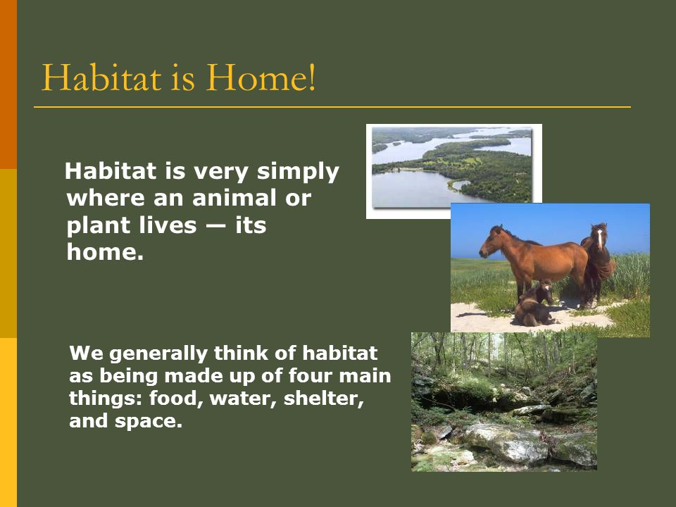Habitat is Home! Habitat is very simply where an animal or plant lives — its home.