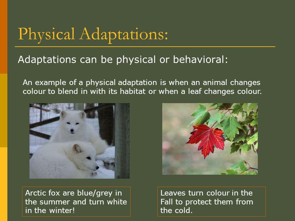 Physical Adaptations: