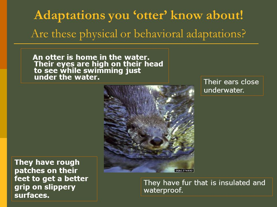 Adaptations you 'otter' know about