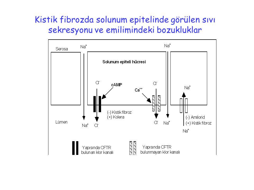 Kistik fibrozda solunum epitelinde görülen sıvı sekresyonu ve emilimindeki bozukluklar