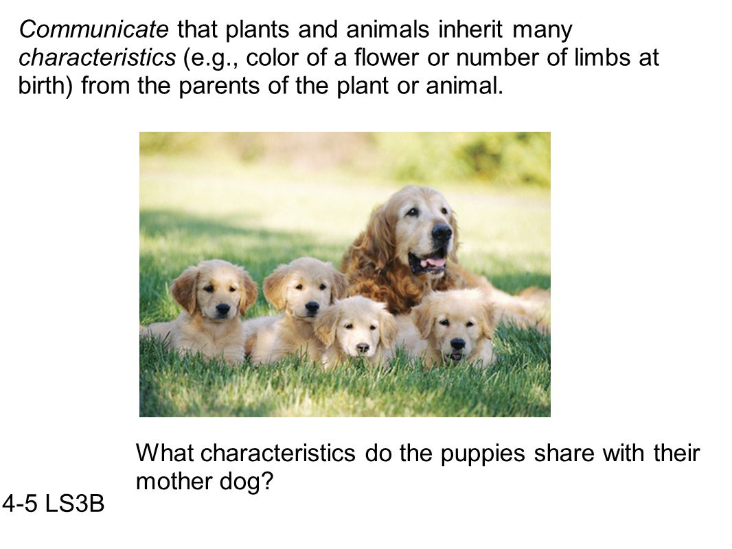Communicate that plants and animals inherit many characteristics (e. g