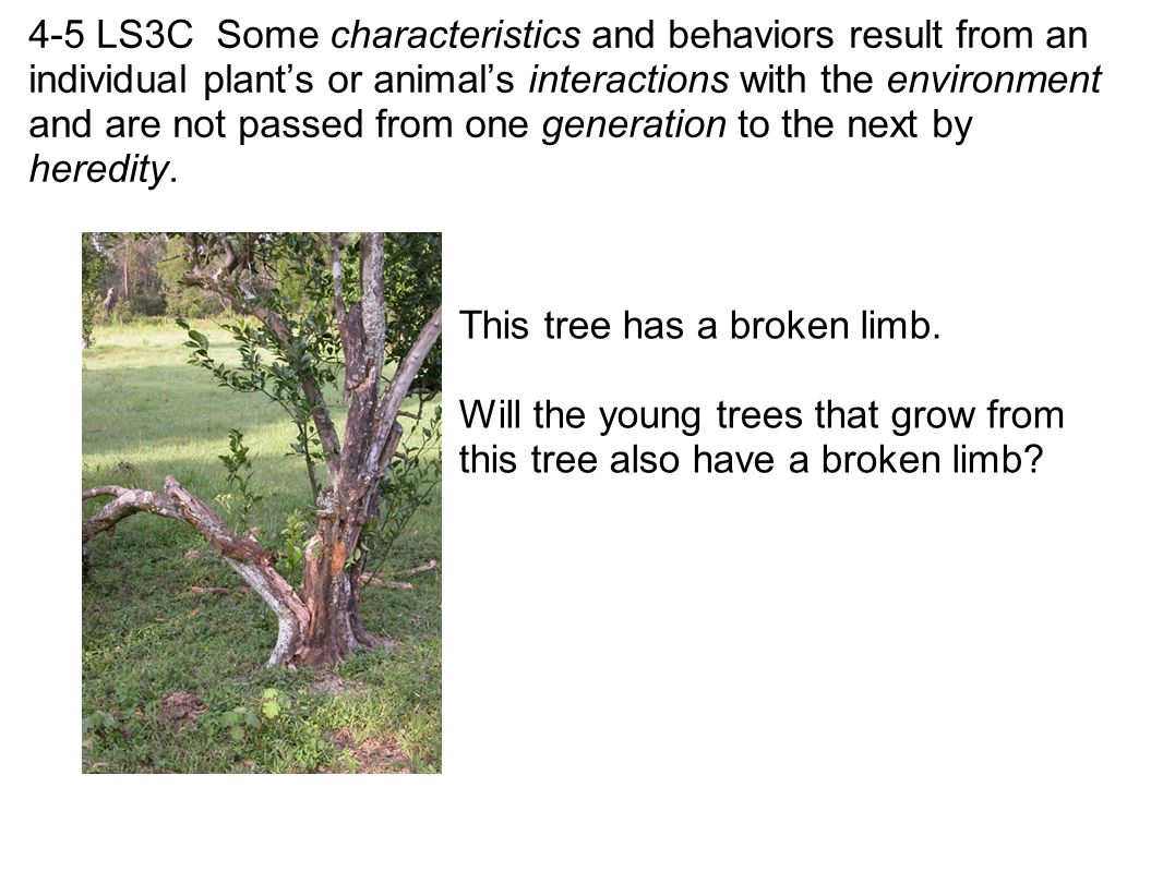 4-5 LS3C Some characteristics and behaviors result from an individual plant's or animal's interactions with the environment and are not passed from one generation to the next by heredity.