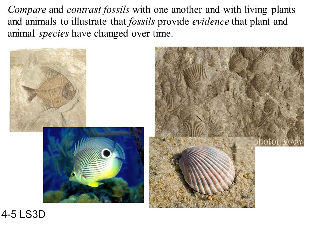 Compare and contrast fossils with one another and with living plants and animals to illustrate that fossils provide evidence that plant and animal species have changed over time.
