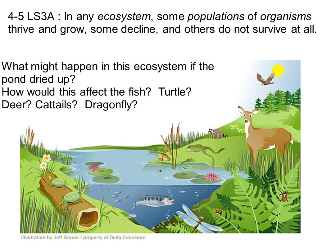 4-5 LS3A : In any ecosystem, some populations of organisms thrive and grow, some decline, and others do not survive at all.