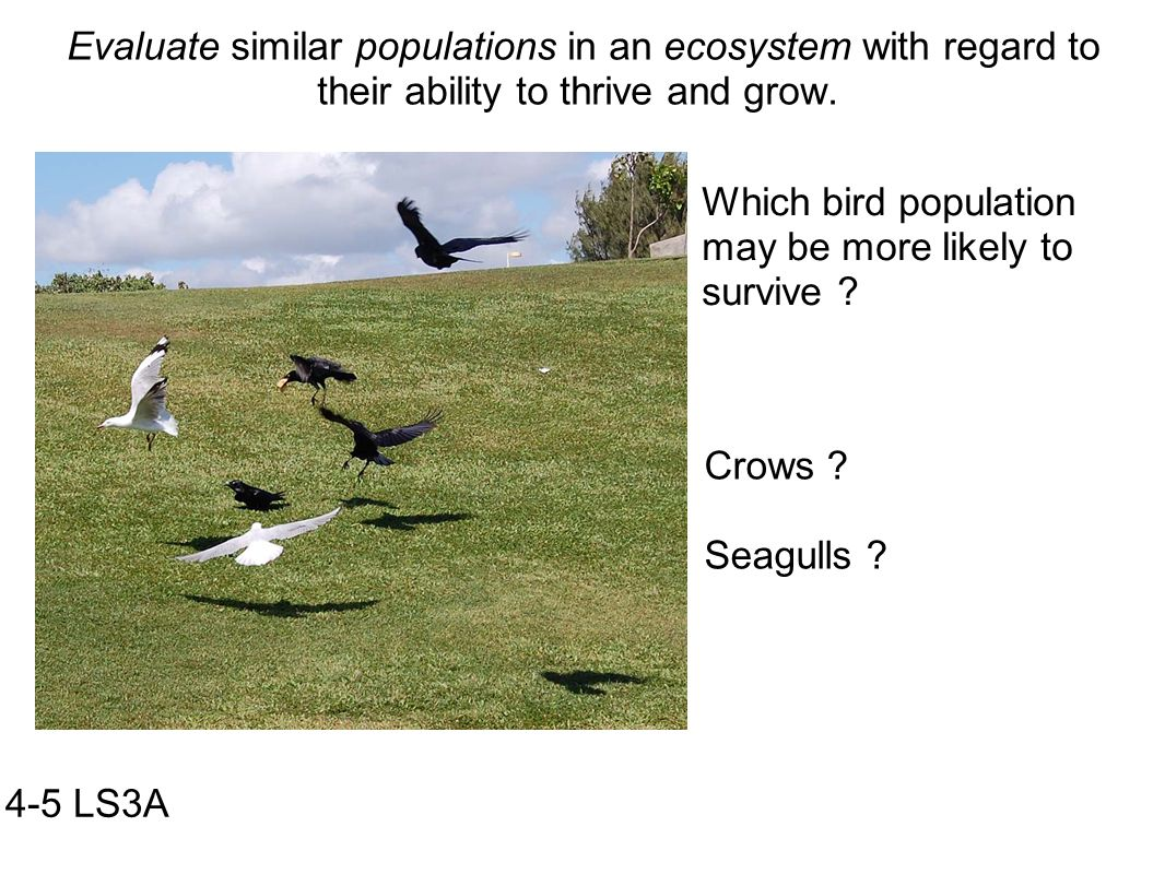 Evaluate similar populations in an ecosystem with regard to their ability to thrive and grow.